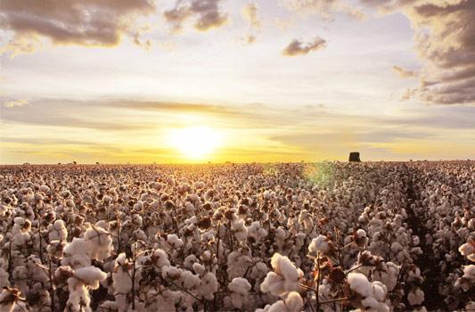 FF Organic, Fertilizantes NPK que Revolucionaram o Mercado Agrícola Brasileiro